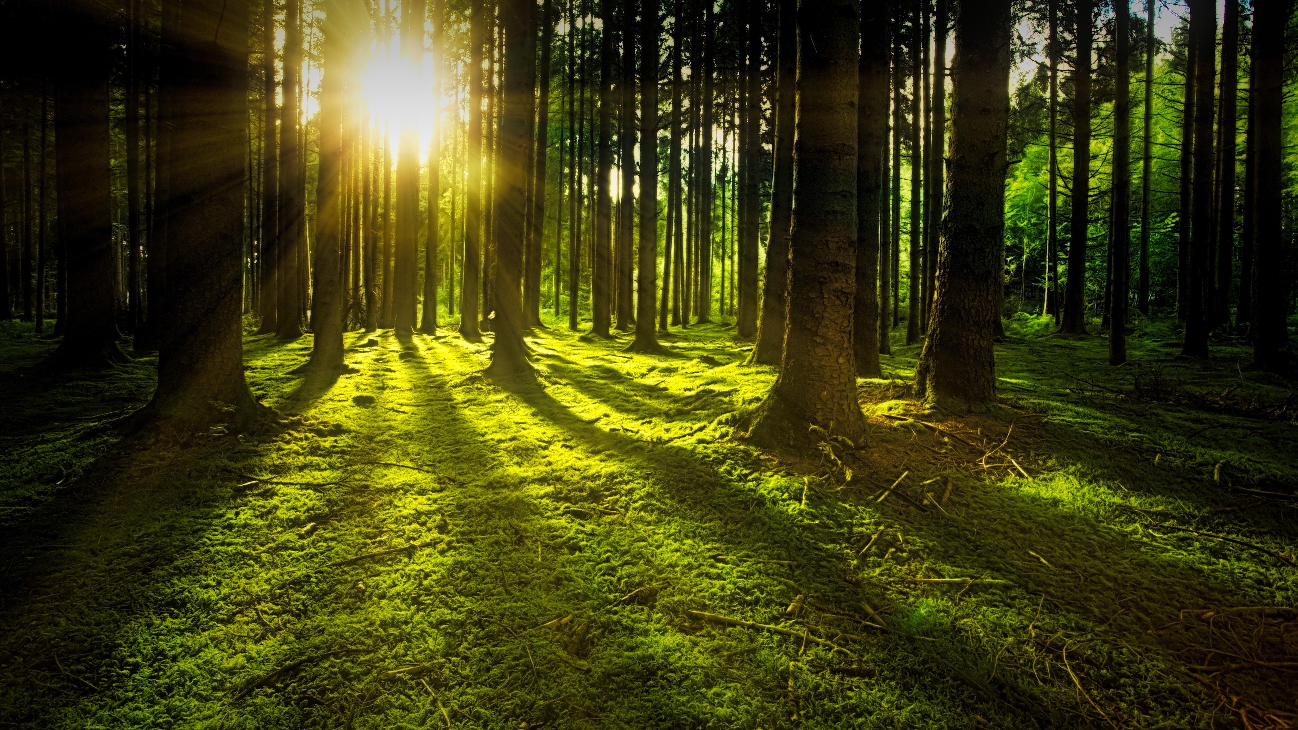 forest-grass-green-1125776